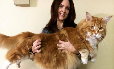 Ez a macska akkora, mint egy kutya