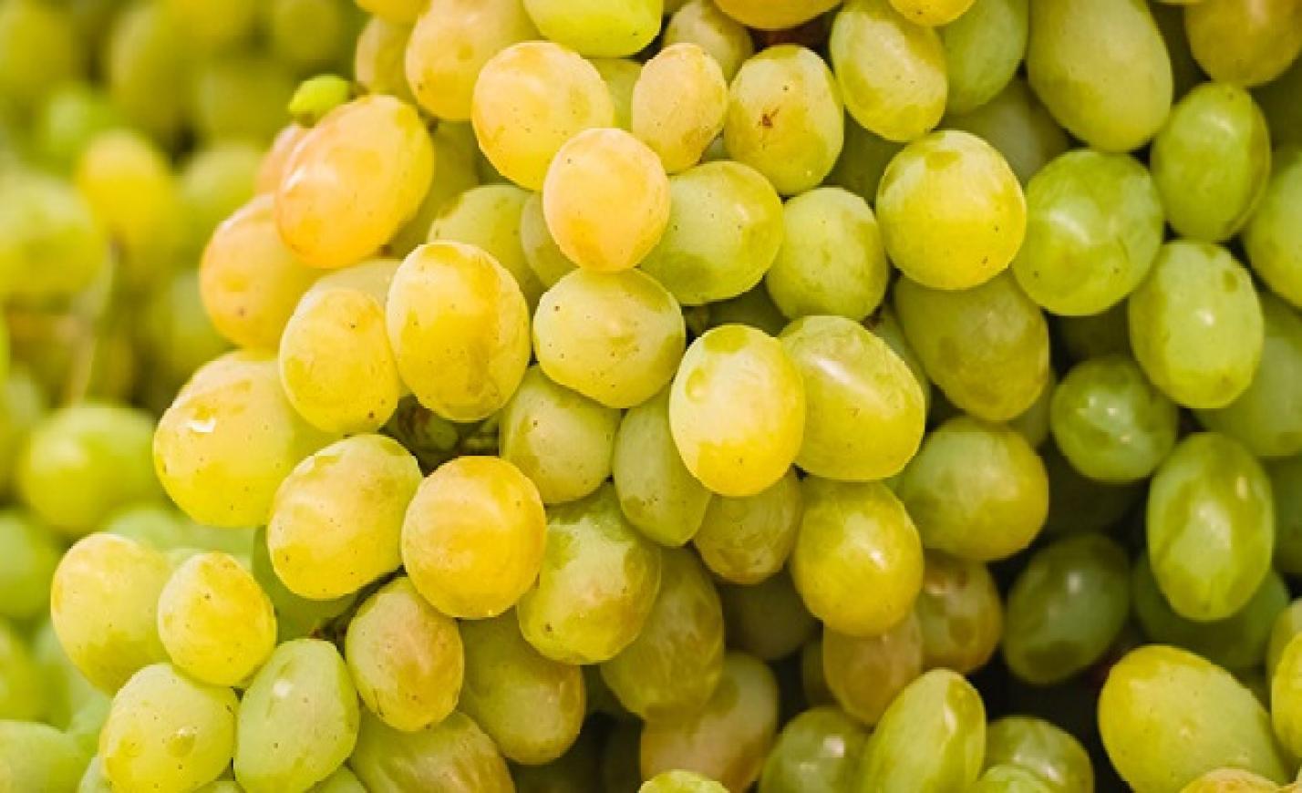 Biztató állapotban a szőlő a szüret előtt