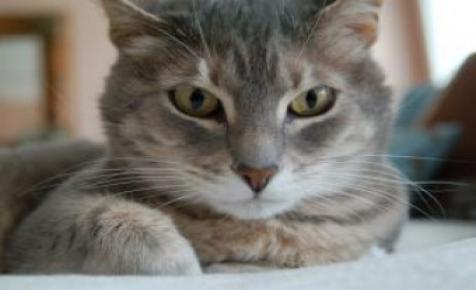 Ötlet új vállalkozásához: macskaborászat