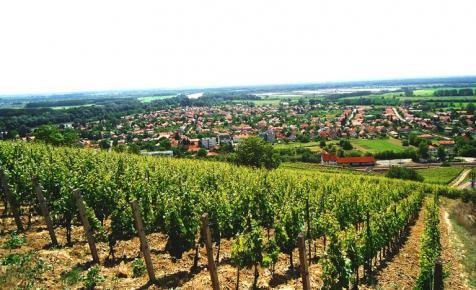 A Tokaji viszi a prímet - Ezeket a magyar borokat isszák a diplomaták