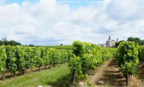 Nem károsodtak a szőlőültetvények a márciusi fagyokban