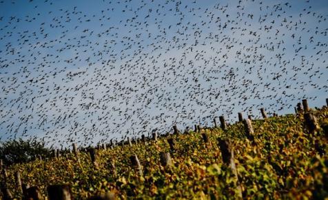 Milliárdokat öntenek a tokaji borvidékbe, de nem világos, kinek szépítik