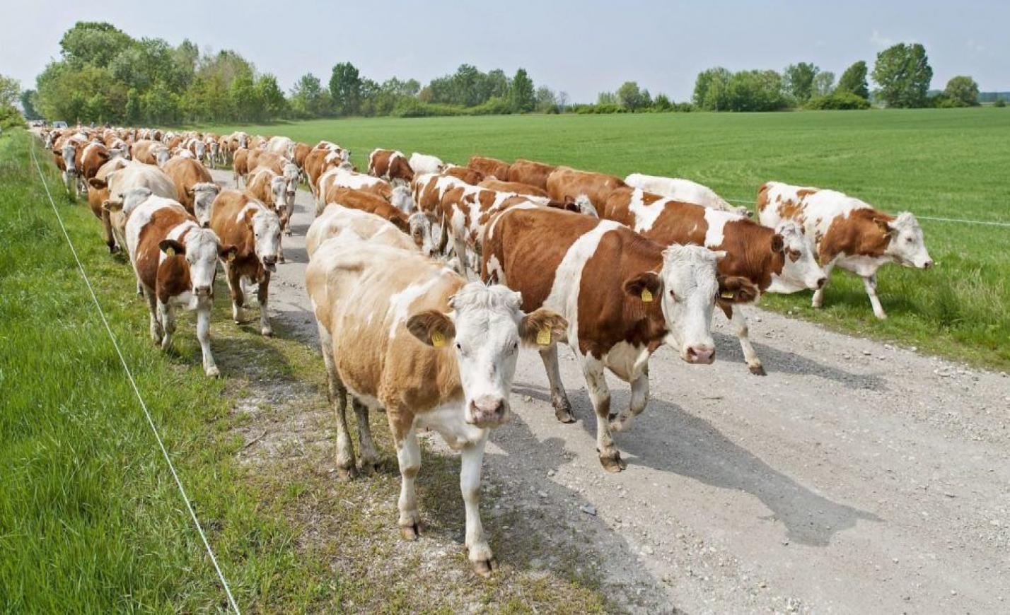 """Van, ahol már a tehenek is """"interneteznek"""""""