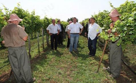 Az nyisson borászatot, aki a nagy vagyonból kisebbet szeretne csinálni?