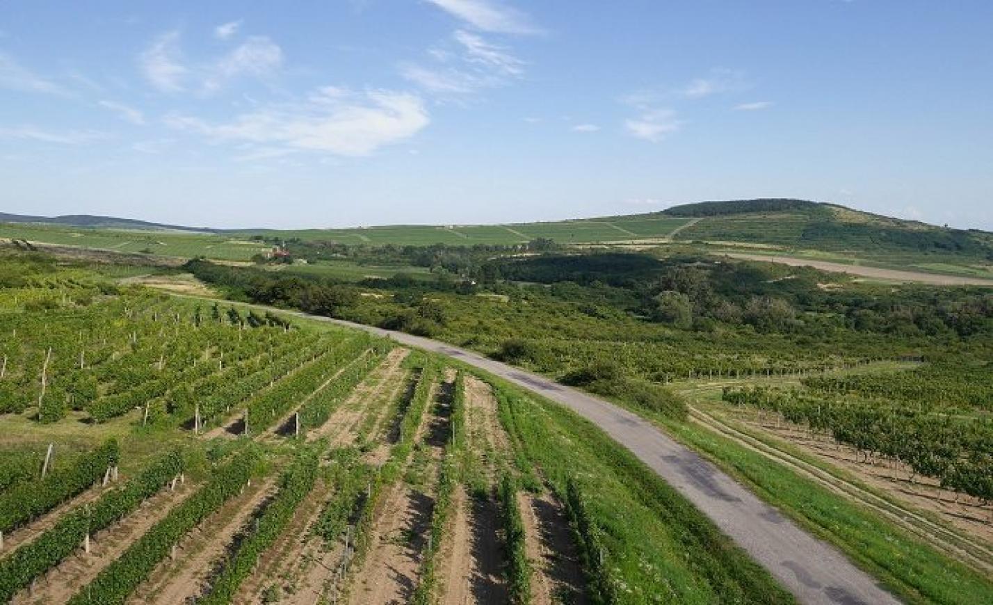 A tokaji Holdvölgy borát választották a világ második legjobb muskotályának