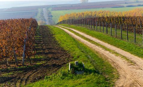 Állásajánlat: borászt keresnek a Mátrában
