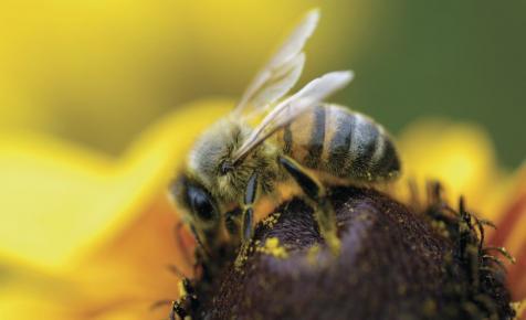 Több mint egymillió méh pusztult el Fokváros környékén