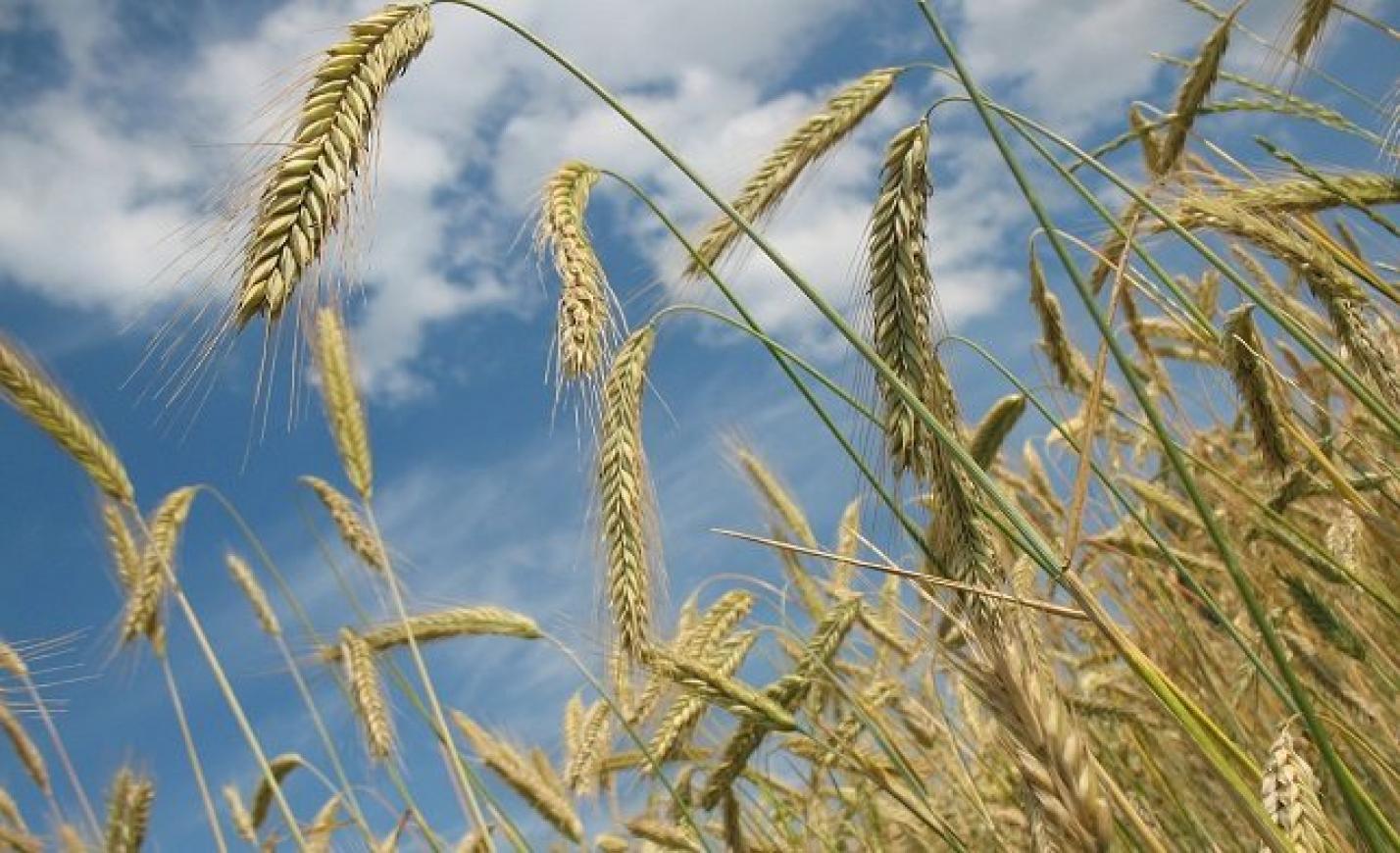 A közös agrárpolitika jövőjéről tanácskoztak a visegrádi országok agrárkamarái Veszprémben