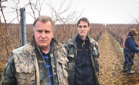 Klíma, munkaerő, piac: Túlélési taktikák egy 25 hektáros szőlészetben (+videó)