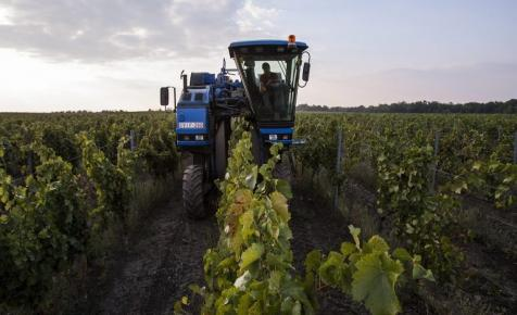 Aranyesőben fürdött a magyar borászat