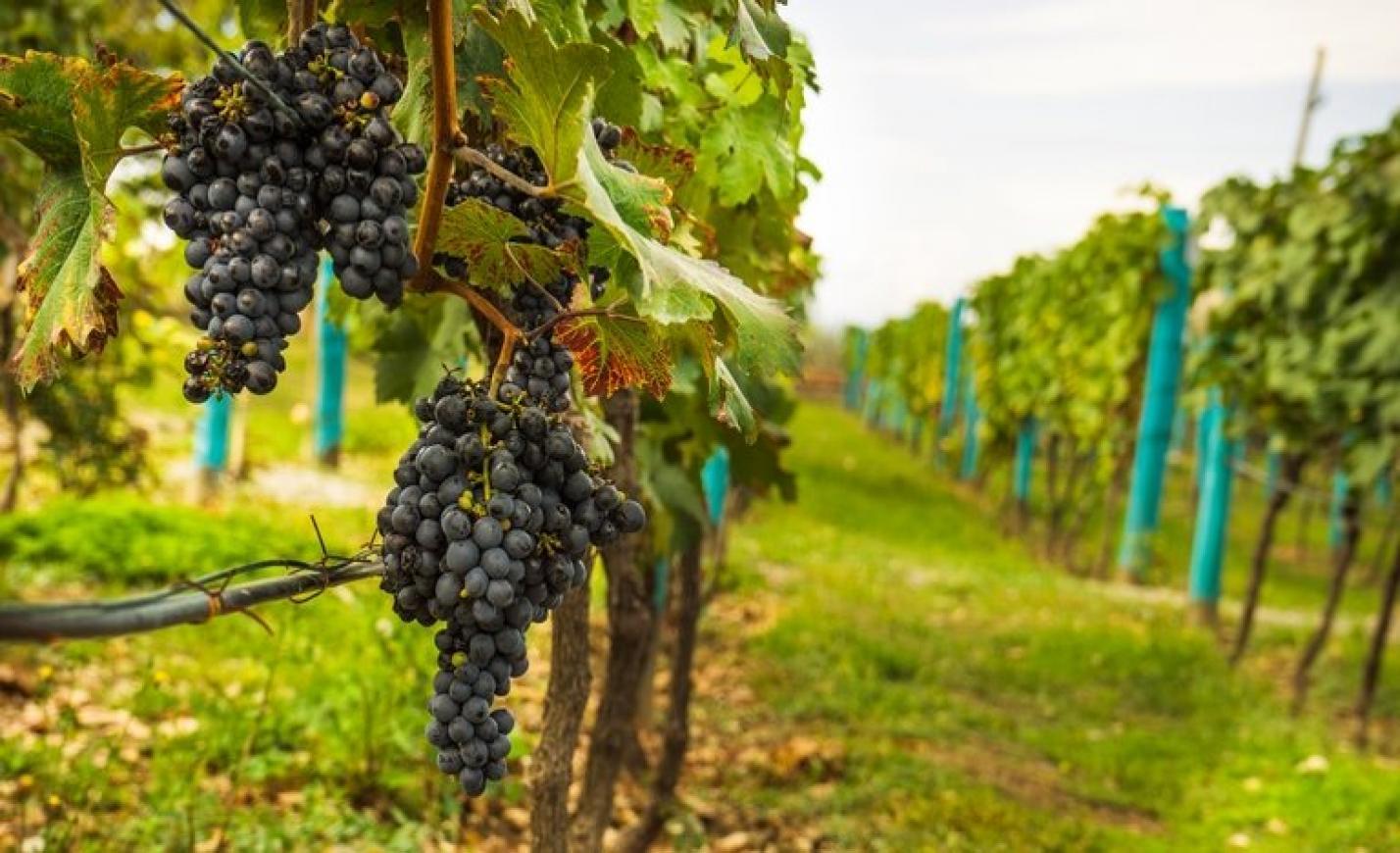 Országos borverseny: ezek a legjobb borászatok most Magyarországon