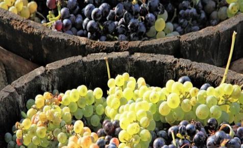 Komoly válság előtt az európai borpiac: így úszhatják meg a magyar szereplők
