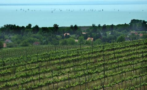 Milliárdos borászati központot adtak át a Balatonnál