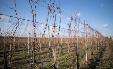 Milliárdos fejlesztésre készül a nagy villányi borászat