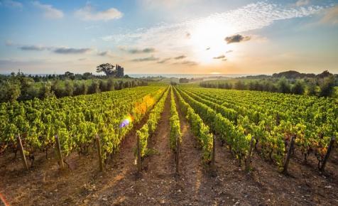 Új élelmiszeripari-borászati pályázat készül - szombatig véleményezhető