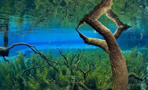 Napi 4,1 millió liter vizet venne ki a Nestlé egy floridai forrásból