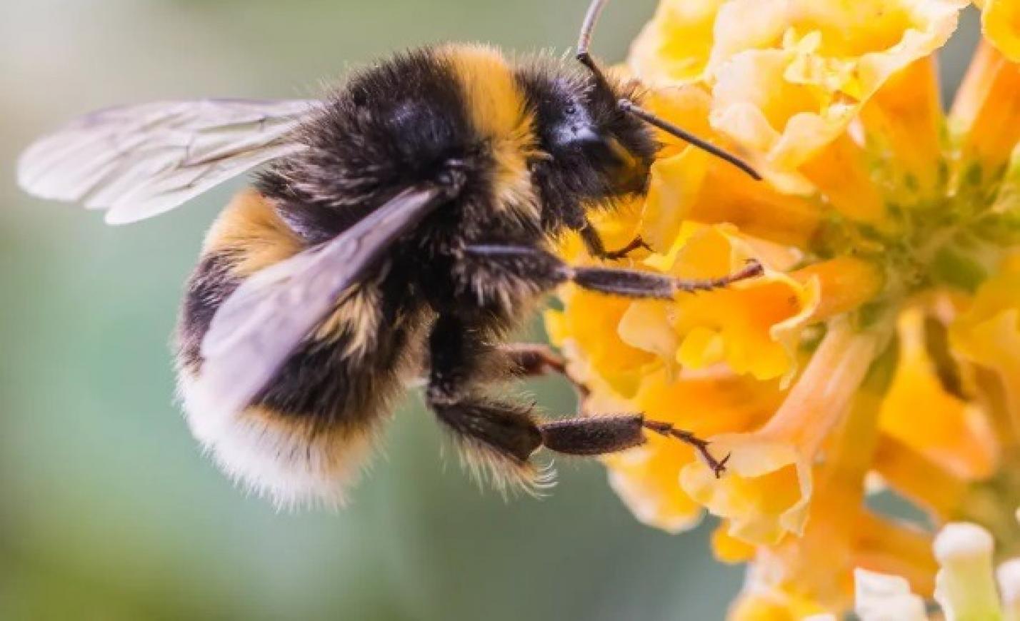 Több mint 500 millió méh pusztult el Brazíliában