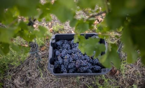 Ez tarthatatlan: háromszor többet fizetnek az osztrák borokért külföldön, mint a magyarért