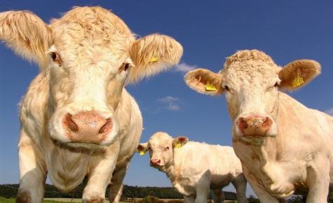 KSH: nőtt a növénytermesztés és az állattenyésztés teljesítménye tavaly