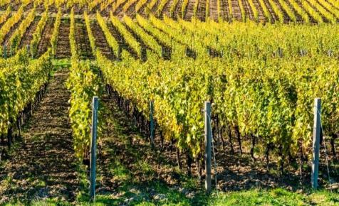 Magyar borász kapta a szakma legfontosabb kitüntetését