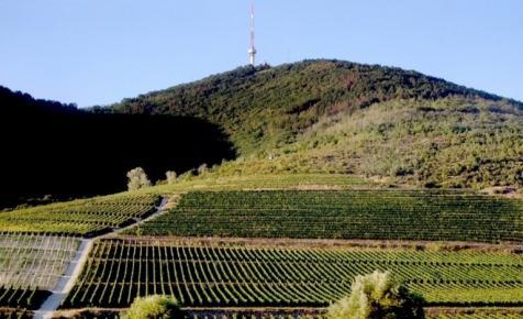 Megállapodott a két szuperhatalom: megmenekülhetnek a hamisítástól a tokaji borok