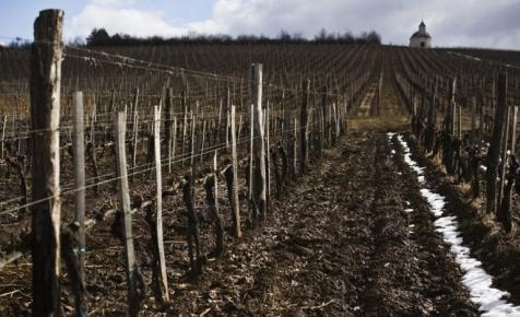 Magyar a világ legdrágább bora: mutatjuk, mi kerül rajta ennyibe