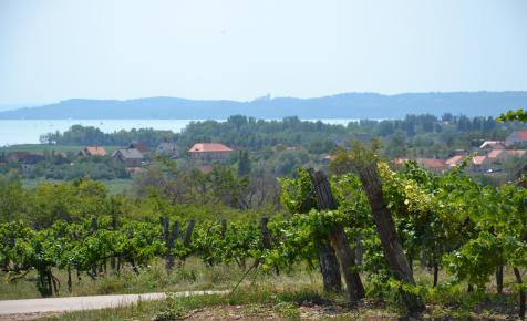 Új honlap segíti a borturizmust