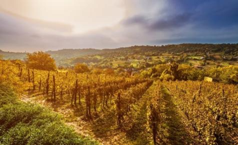 Nagy István: a bortörvény módosítását tervezi az agrártárca