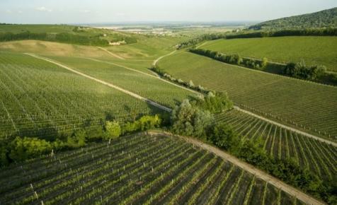 Kongatják a vészharangot: súlyos válságba került a hazai szőlő- és borágazat