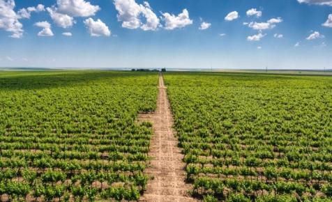 Mi történik? Bajban van a világ egyik legnagyobb bortermelője