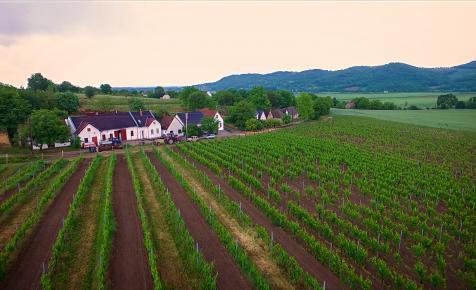 A világ legjobb borai között van a magyar borász rozéja és vörösbora
