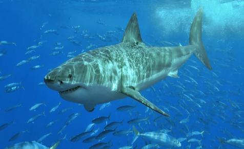 Vadászat indult a cápa után, ami megölt egy nőt Maine-ben