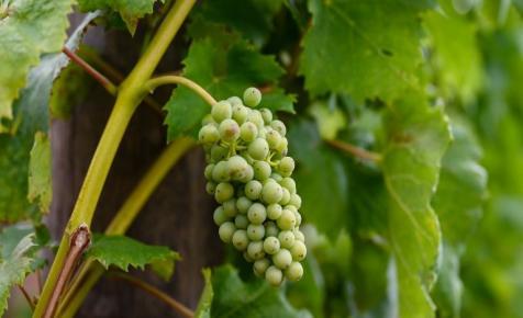 Zsákfaluból hódít a családi borászat: nemrég még csak mezei szőlőtermelők voltak