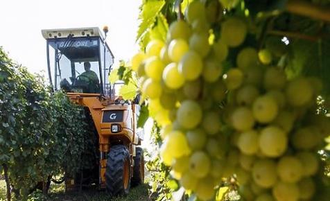 Milliárdosok borászatát is közpénz-milliókkal támogatja az Orbán-kormány