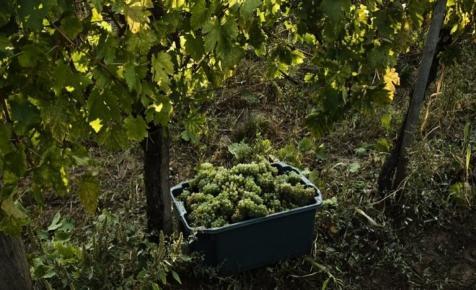 Szélmalomharcot vívnak a magyar borászok: ezzel évek óta sikertelenül próbálkoznak