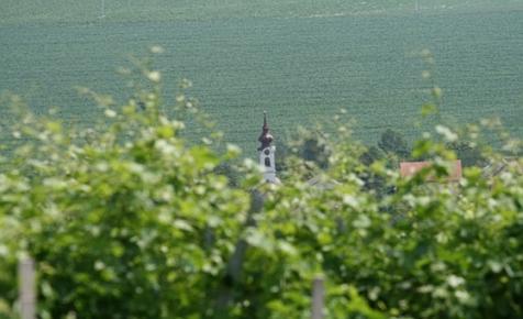 Megválasztották Magyarország legszebb szőlőbirtokait, Szekszárd tarolt