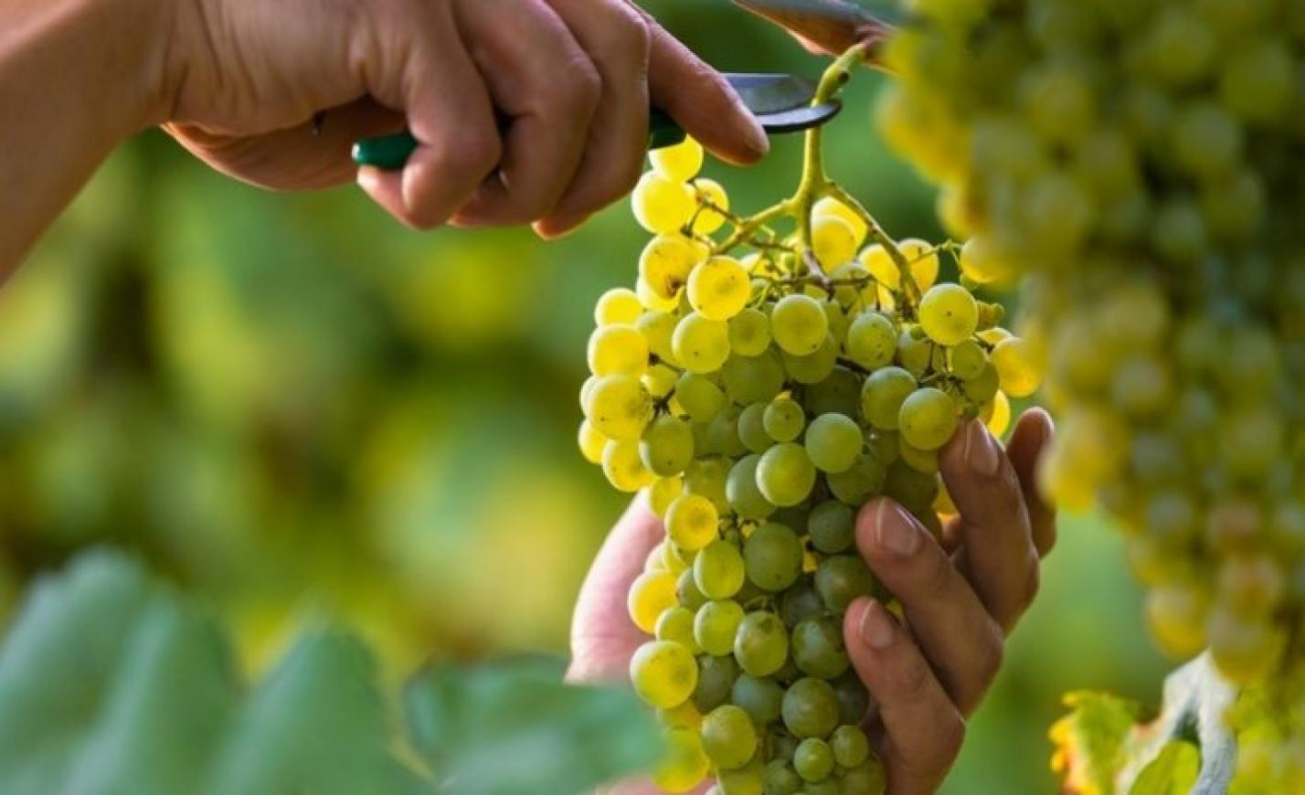 Milliárdos borászati támogatási program indul: itt vannak a részletek