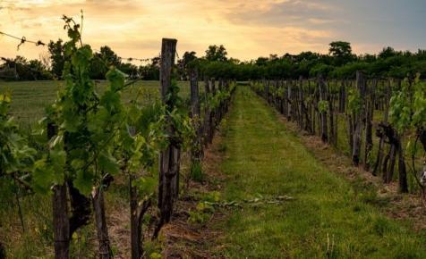 Milliárdos támogatást kapnak a magyar borászok: erre használhatják fel a pénzt