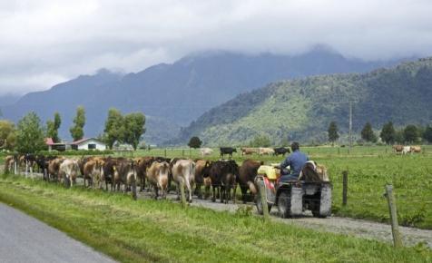Ne csak termeld add is el: Új-Zéland olyat tud tejiparban, mint Szaúd-Arábia olajban