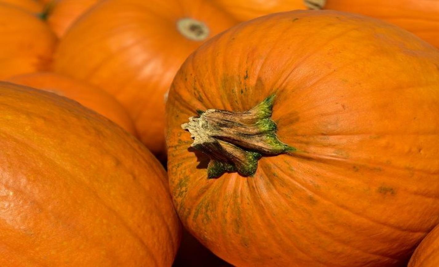 Nébih: biztonságosak a magyar termesztésű sütőtökök