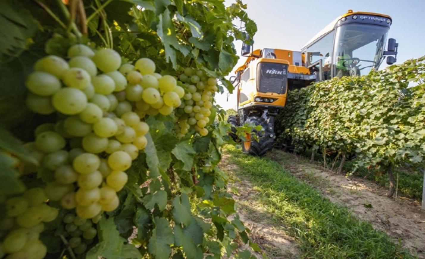 Magyarország középhatalom az EU-ban – ha borban mérjük
