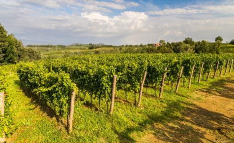 Megjelentek a szőlészeti-borászati támogatások keretösszegei: itt vannak a számok