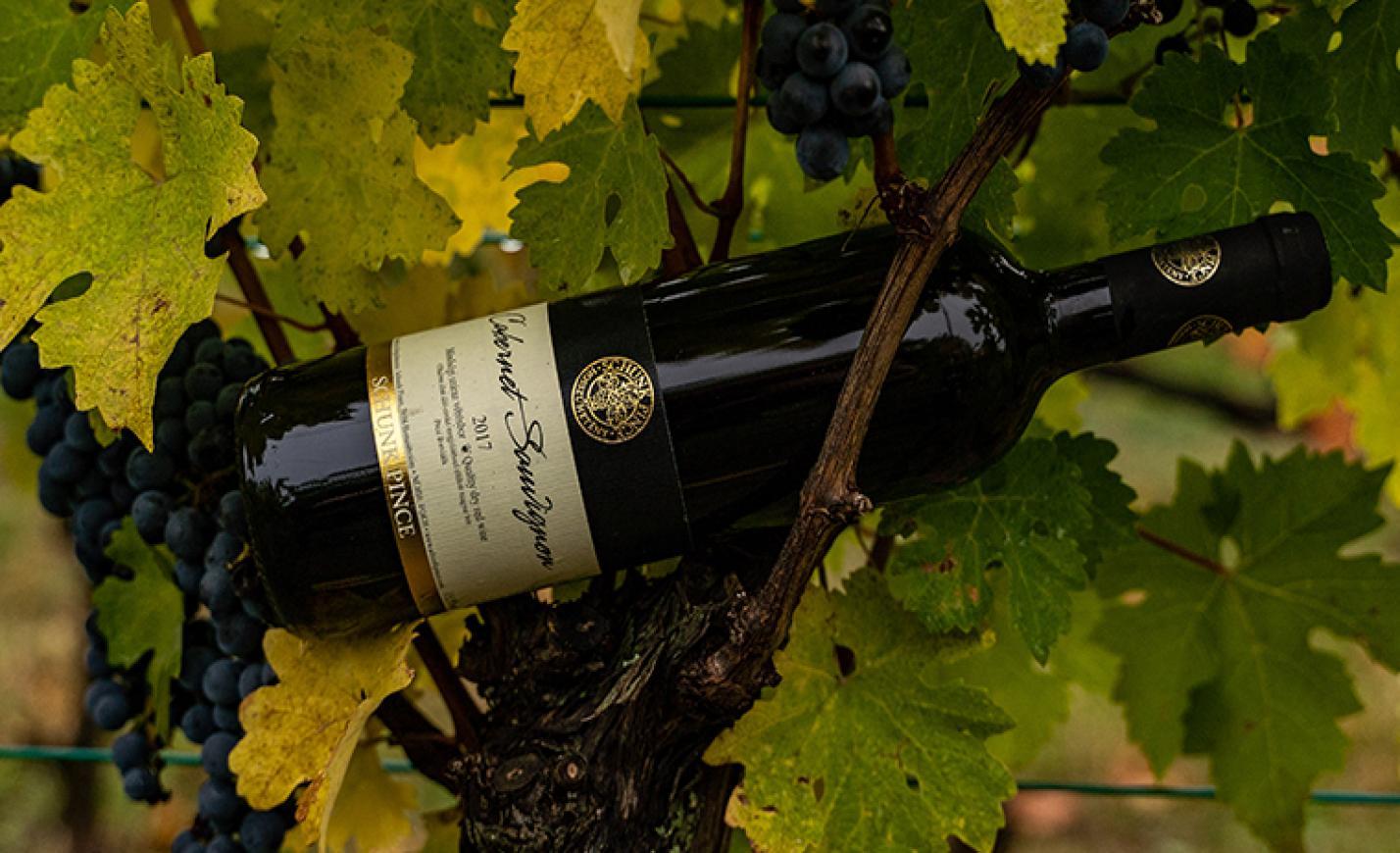 Minden napra egy bor: Schunk Pince Cabernet Sauvignon 2017