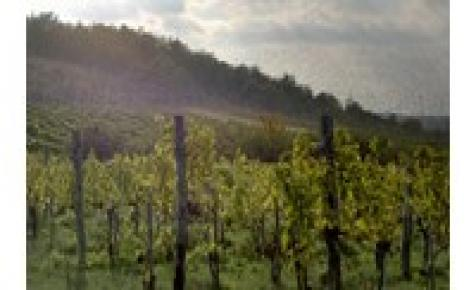 A borászat nem egy romantikus elfoglaltság, hanem folyamatos harc az elemekkel