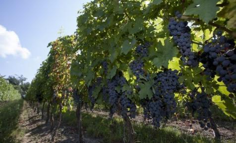 Bréking! Elfogadta az Országgyűlés az új bortörvényt