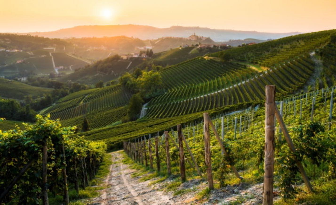Szintet lépett a kampány: új módszerrel népszerűsítik a magyar borokat
