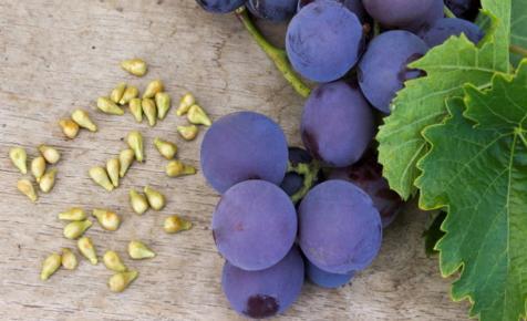 Elképesztő: ki nem találnád, mit sikerült kiolvasniuk a szőlőmagokból a kutatóknak