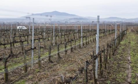 Milliárdos támogatást kapnak a magyar borászok: így juthatnak hozzá
