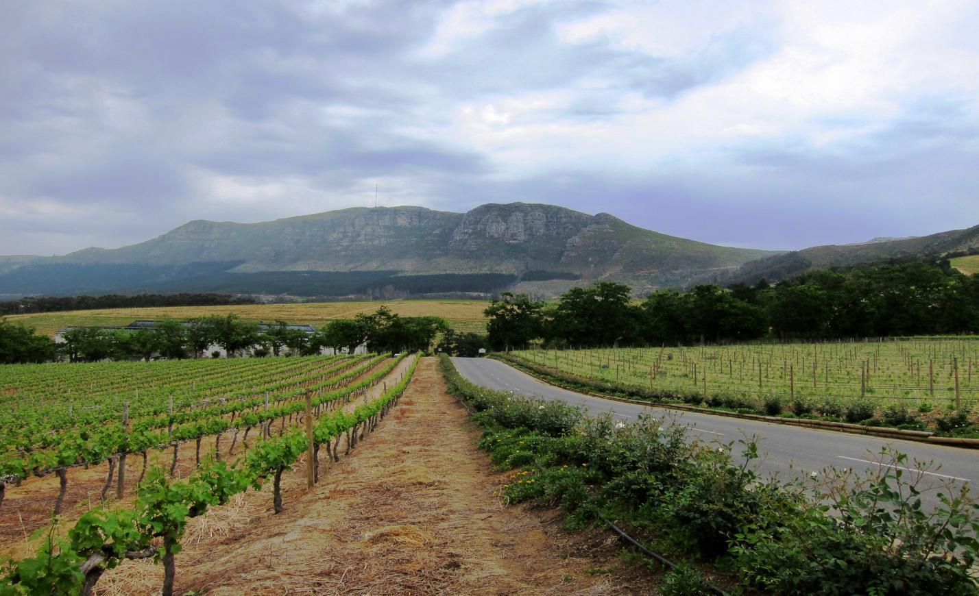 A koronavírus-járvány lanyhulásával erőre kaphat egy nagy termelő ország boripara is