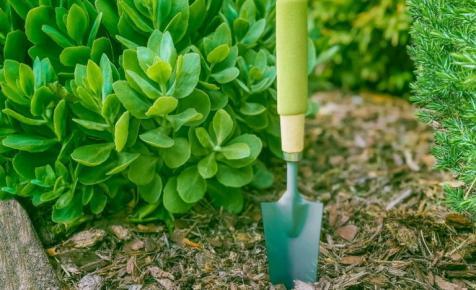 Így kertészkednek a magyarok: tömegek veszik ezeket a termékeket az internetről